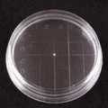 VWR Petri Dishes, Contact Plate, Sterile 3556 Convex Bottom, Inside Grid