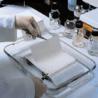 Pall Biotrace Nt 7X8.5CM 0.45UMPK10 66593
